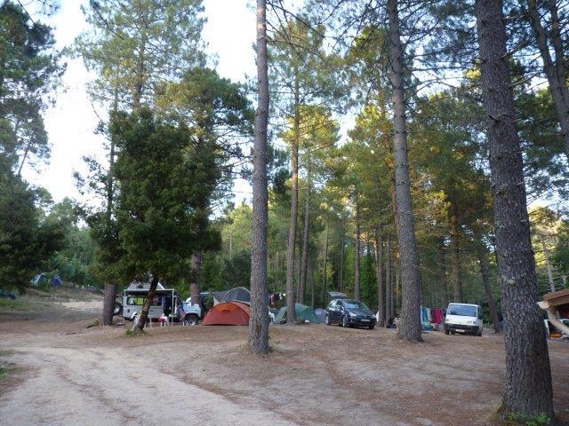 La fraicheur et la quiétude des pins centenaires